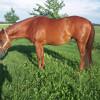 Koně na prodej