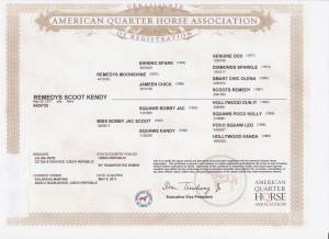 Kendy certifikat 001