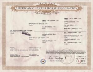 Magnum Certifikat
