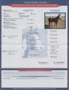 Shorty certifikat